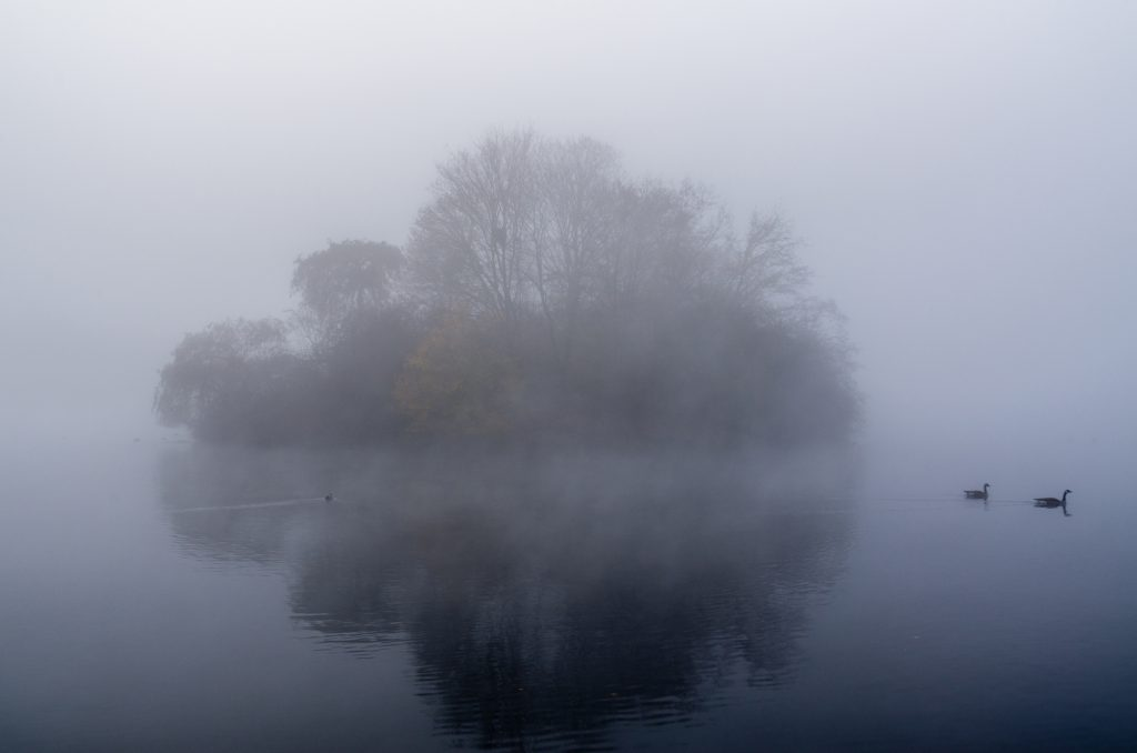 Reiherinsel im Nebel