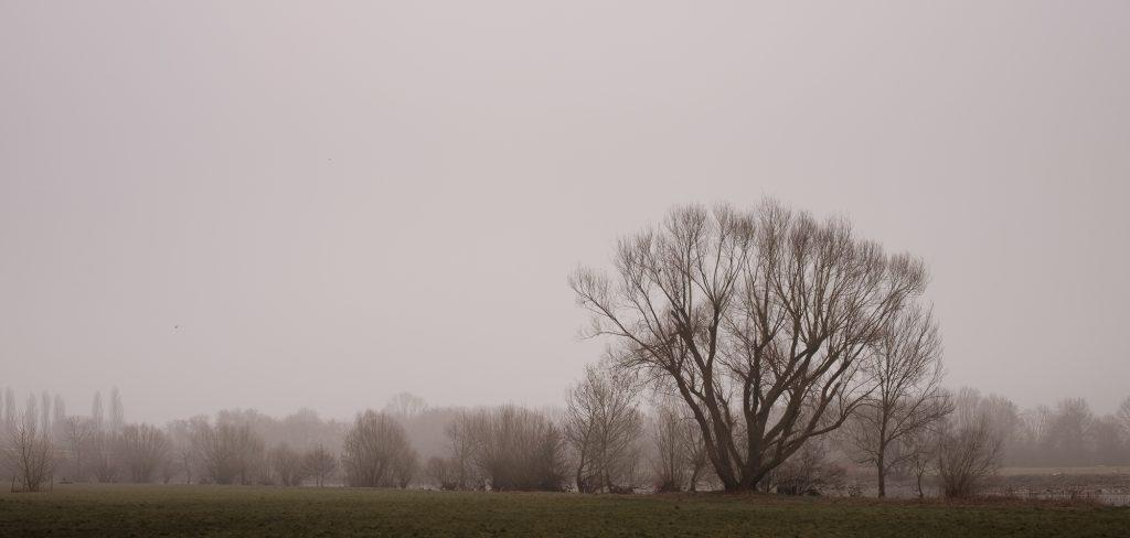 Ruhrauen im Nebel