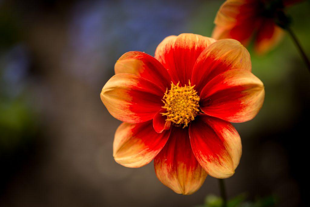 Blumen gehen immer