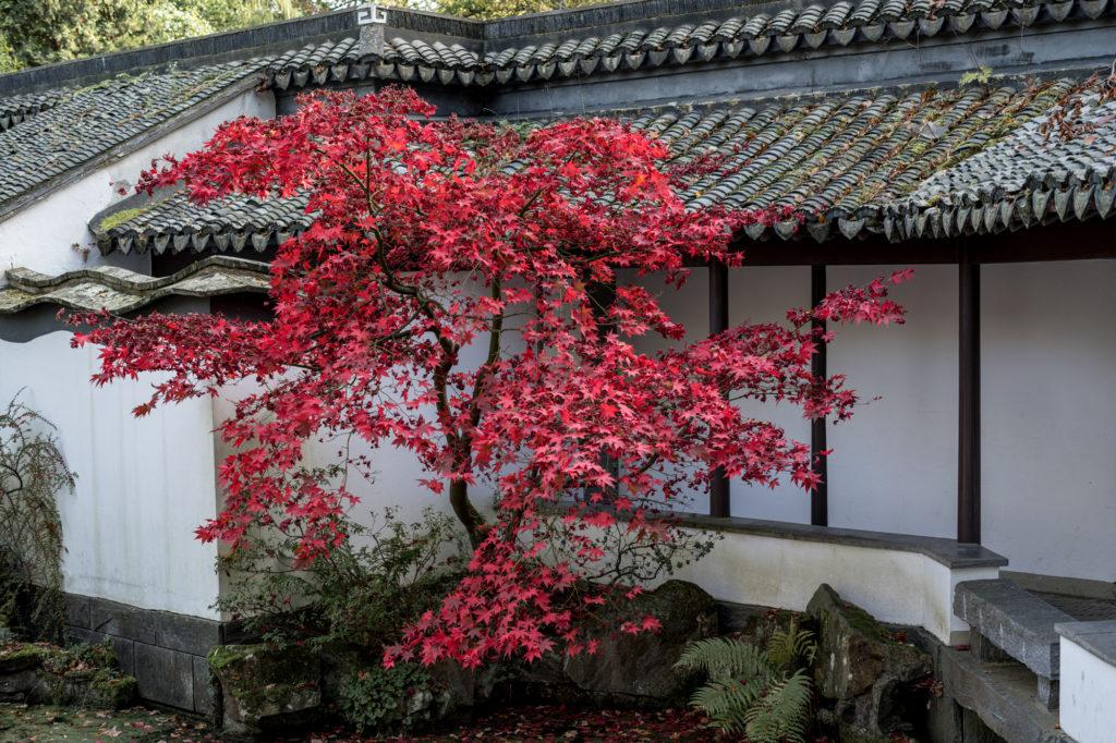der rote Herbst