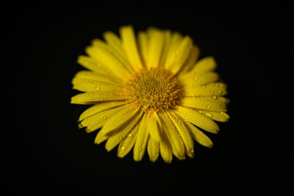 Blumen gehen jeden Tag