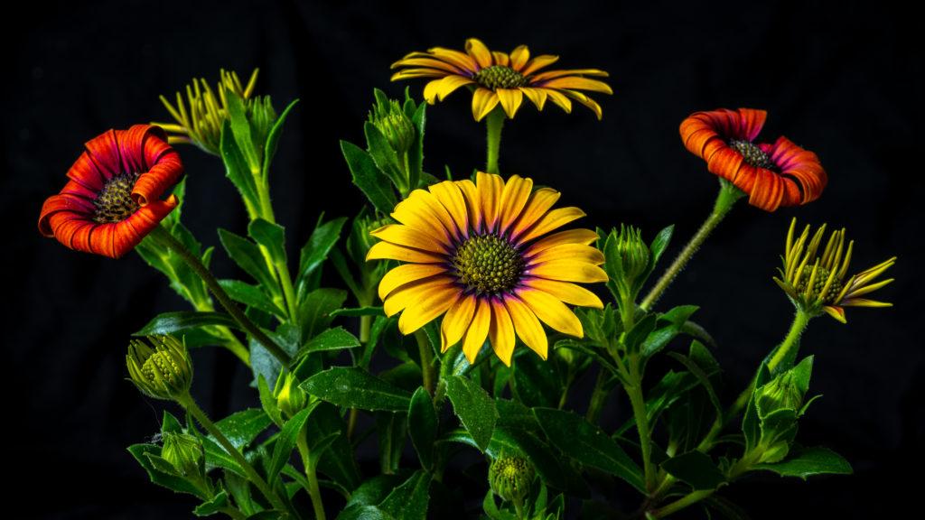 florales Stillleben