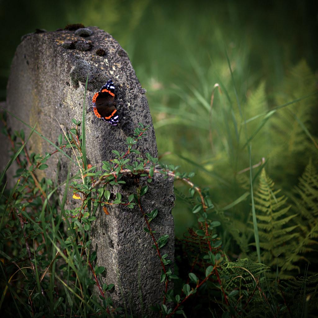 Schmetterling auf Grabstein